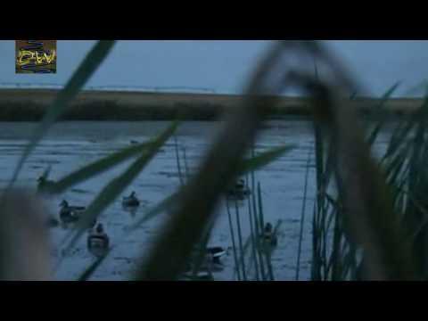 Caza de patos y Gansos