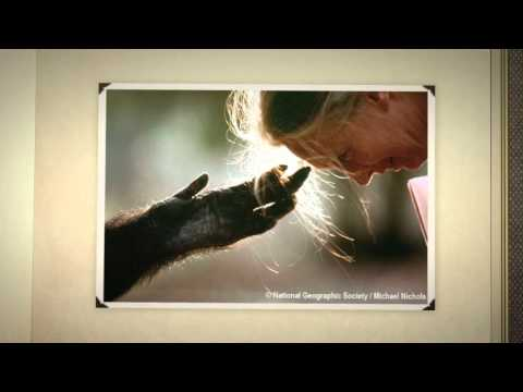 Jane Goodall's 80th Birthday