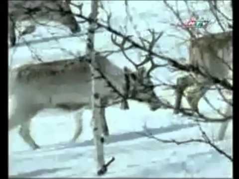 Thực hành: Xem phim về tập tính của động vật. Tổ 4 Lớp 11A11