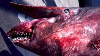 GOBLIN SHARK CAUGHT OFF FLORIDA