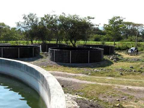 Acuacultura estanques circulares youtube for Estanques de geomembrana para tilapia