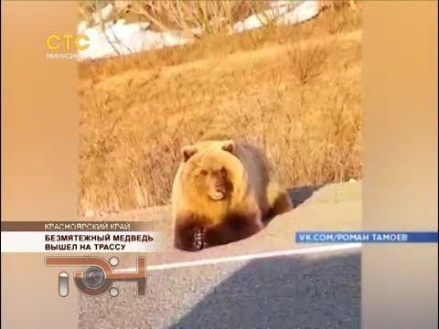 Безмятежный медведь вышел на трассу