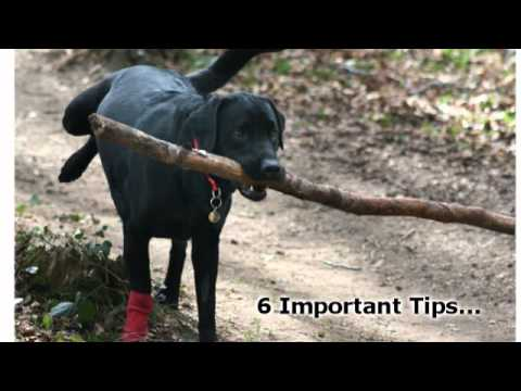 How To Train Your Dog - 6 Important Tips For Dog Obedience Training, http://dog-think.com - Hey everybody! If you want to learn how to train your dog, first watch the video above for the fundamentals of training and start to l...