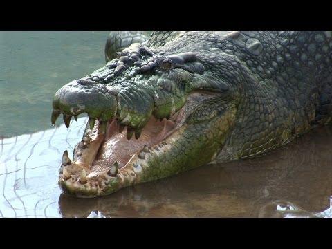 Nach Weltrekord-Fang: Jagd auf Riesen-Krokodil