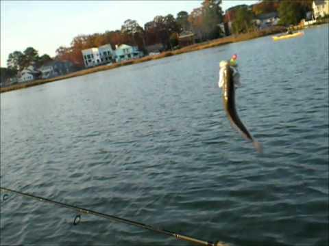 Fishing rudee inlet nov 19 2010 youtube for Rudee inlet fishing