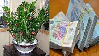 Đặt 7 loại cây này trên bàn thờ, gia đình đời đời BÌNH AN, PHÁT TÀI PHÁT LỘC