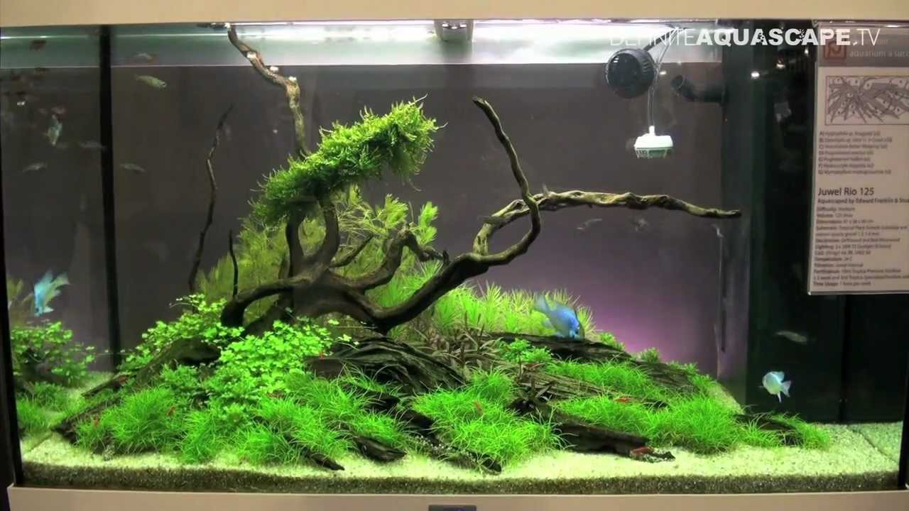 Fish Tank Ideas No Fish : Aquascaping - Aquarium Ideas from Aquatics Live 2012, part 2 - YouTube