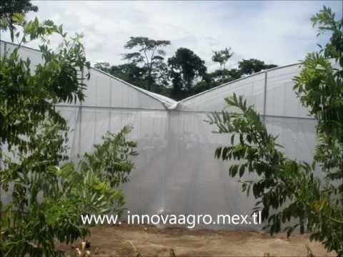 CONSTRUCCION INVERNADEROS MEXICO