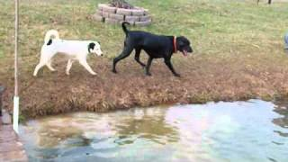 Catfishing Doggie style with Barney falling in