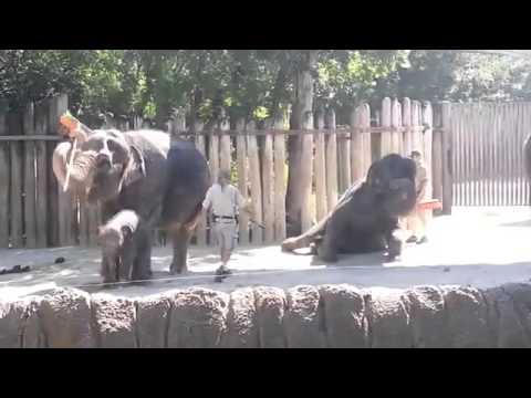 聰明大象 自拿長柄刷洗頭