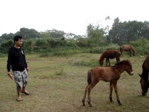 Didit ft Anak Kuda - Horse Kiding - YouTube