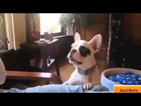 Videos que dan risa (Animales graciosos) perros y gatos