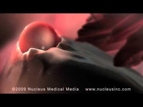 www.mantraivf.com ,ovulation ,mantra ivf center,ivf center in surat
