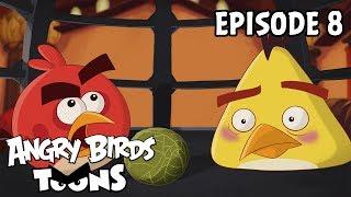 Angry Birds Toons II - 8. Zázrak života