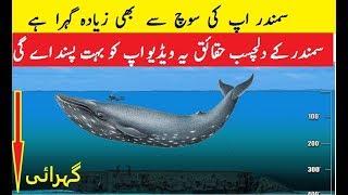 Oceans Of The World Is Deeper Than You Think Samandar Ap Ki Sooch Sa Zaiyda Ghara Hai