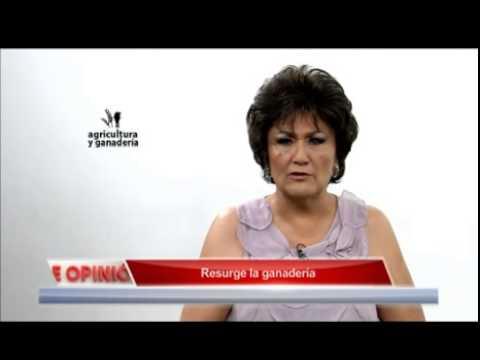 Resurge la Ganaderia AZTECA Barra de Opinion
