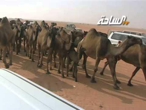 مسيرة منقية / محيميد بن مفلح القوبع النفيعي