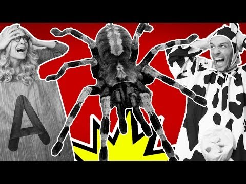 5 Horrifying Facts About Spiders | #5facts