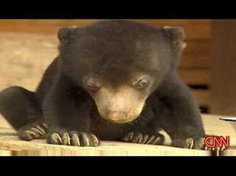 To je moc i na medvěda! :-D