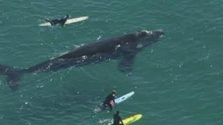 Nadando con una ballena gigante