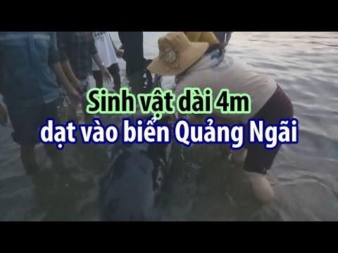 Sinh vật khổng lồ dạt vào biển Quảng Ngãi khiến hàng ngàn người bất ngờ