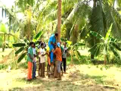 Friends of Coconut Tree - Training in Coconut Tree climbing and pest and disease management
