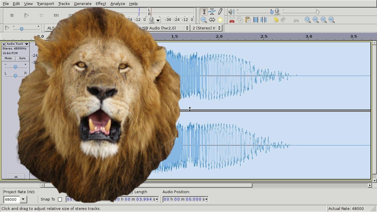 lion roaring sound effect youtube