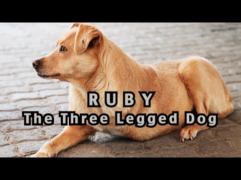 Dog with three legs gets to live