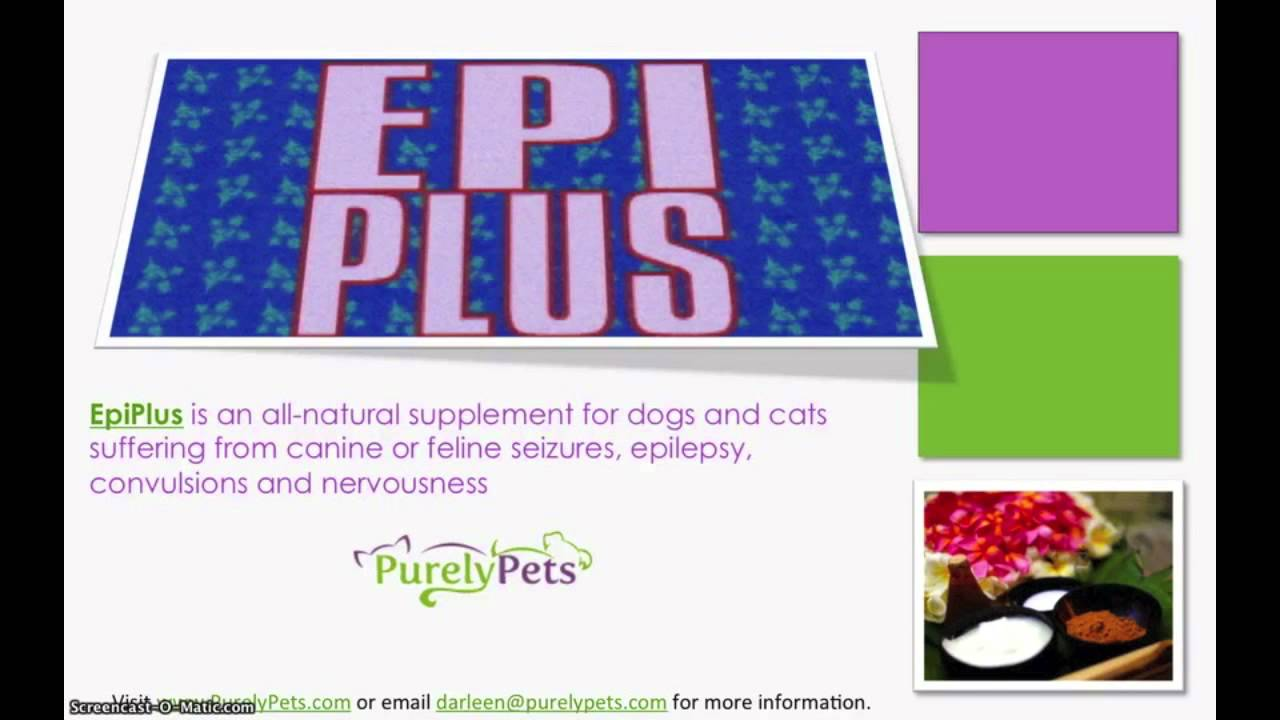 Treating Epilepsy In Dogs Naturally