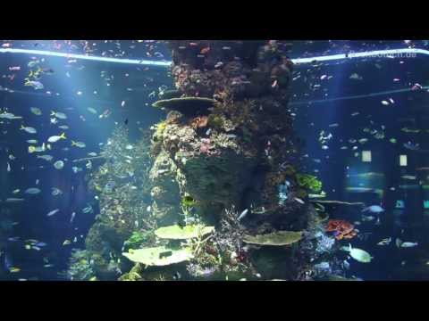 [HD] Strait of Malacca and Andaman sea @ S.E.A. Aquarium [3/17]