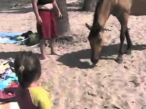 Horses Mating On The Beach B.C.S  MEXICO .mov