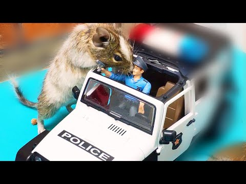Will my funny pets find sweets in a police car, airplane, hunting lodge. Funny pets degu.
