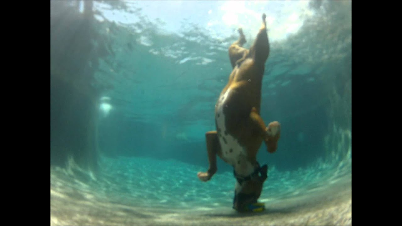 Can Dogs Swim In Lake Tahoe