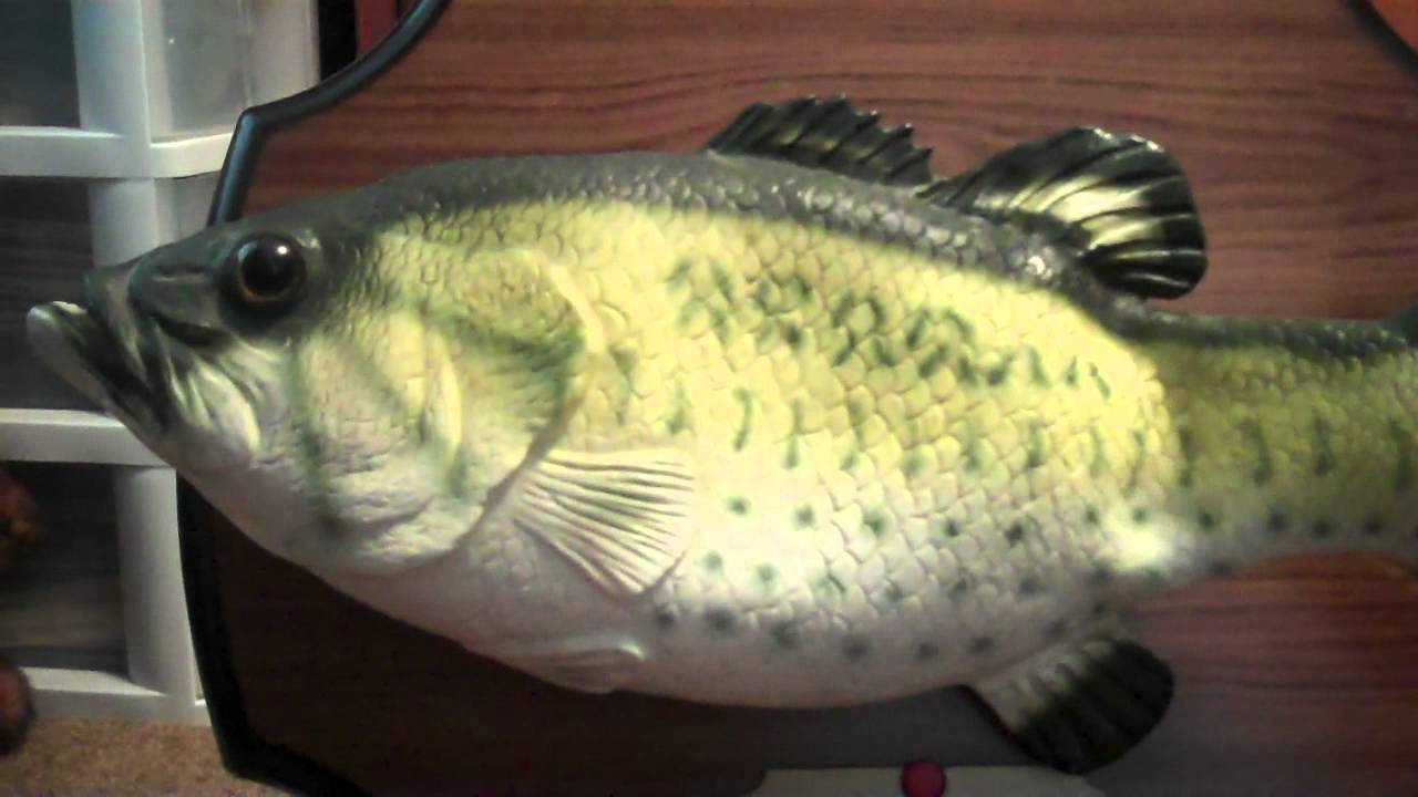 Big mouth billy bass singing fish youtube for Big mouth billy bass singing fish