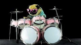 Perro tocando batería