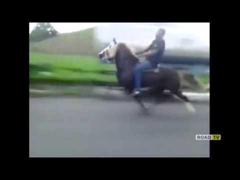 Лошадь с движком V8