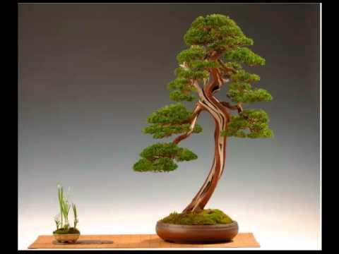 Bonsai boom ikea verzorgen