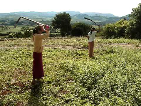 Weed cutting by Myanmar girls