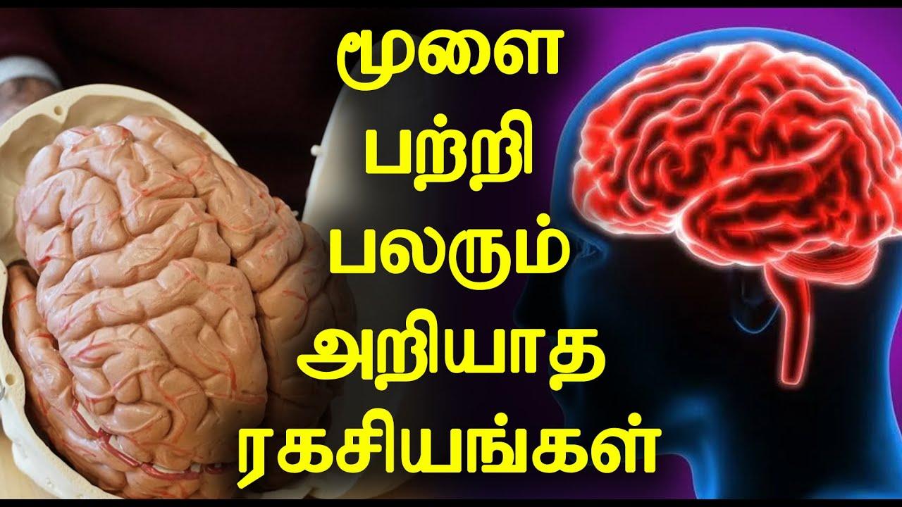 மூளை பற்றி பலரும் அறியாத ரகசியங்கள் | Unknown Secrets about Human Brain