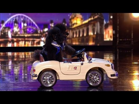 Britain's Got More Talent 2017 Liv & Mojo The Dog Full Clip S11E05