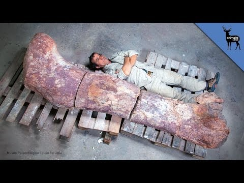 This is The Largest Dinosaur Ever Discovered