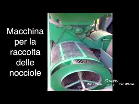 macchina per la raccolta delle nocciole manuale, AZIENDA AGRICOLA DOLCE NOCCIOLA