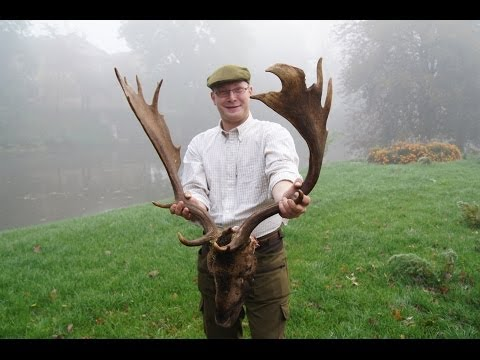 Fallow deer hunting in Poland -  Dåhjort Polen (www.ultimatehunting.eu)