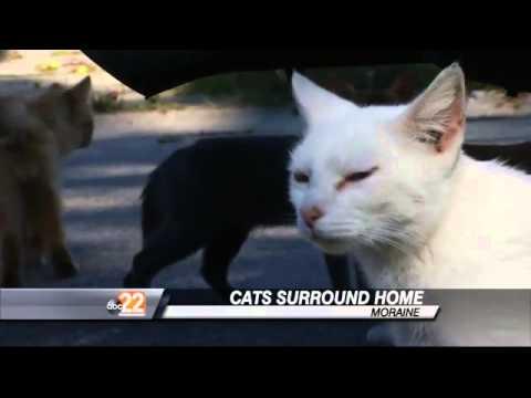 Moraine Home Owner Under Fire for Deplorable Conditions, Feral Cats