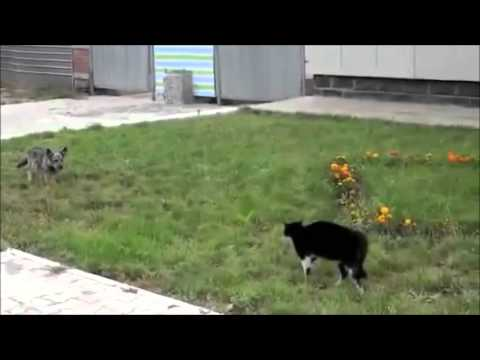Gatos vs Perros chistosos loquendo