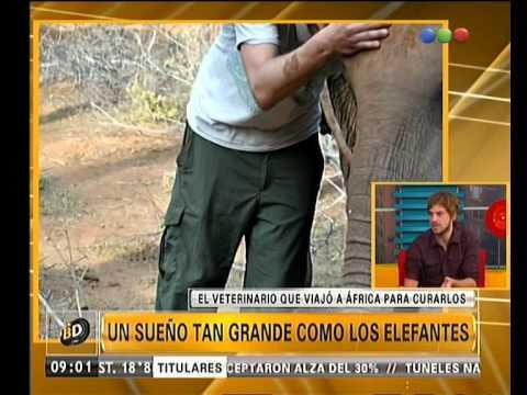 Un veterinario que se dedicó a cuidar elefantes en África - Telefe Noticias