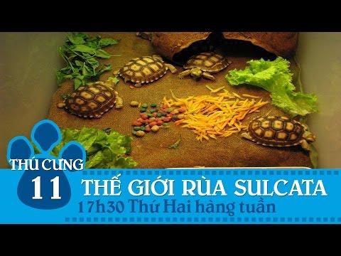 Thú cưng TV – Số 11 – Thế giới loài rùa Sulcata | SNTV