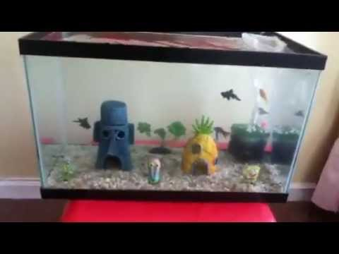 10 gallon fish tank with 2 goldfish 2017 fish tank for 10 gallon fish tanks