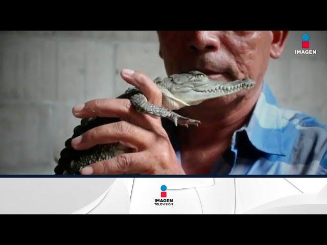 Este hombre tiene 100 cocodrilos de mascota