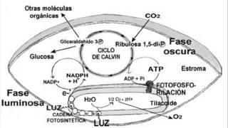 Biología - El ATP